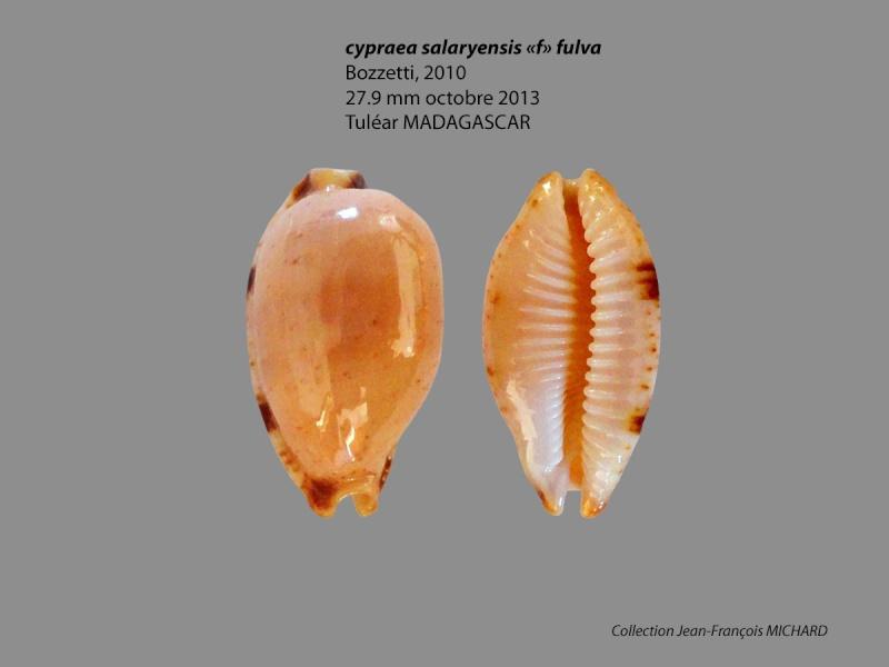 Bistolida stolida salaryensis f. fulva - Bozzetti, 2010 Cyprae10