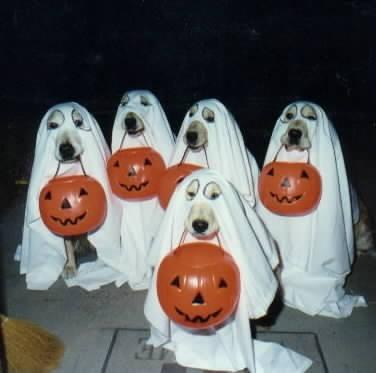 HAPPY HALLOWEEN Ghost_10