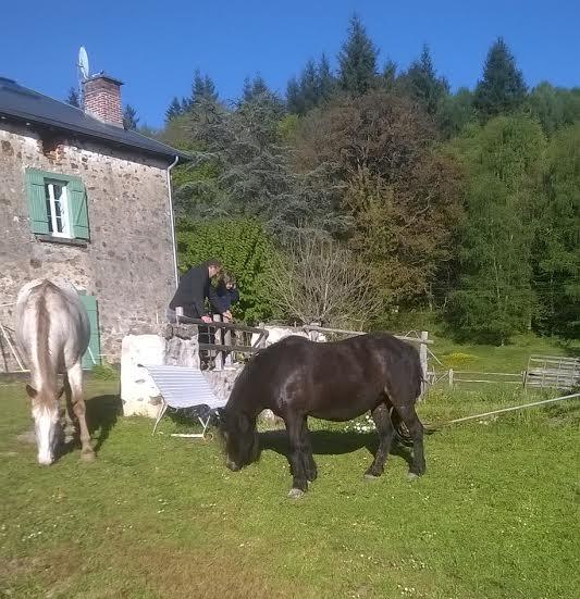 PRUNELLE - ONC poney typée shetland présumée née en 2000 - adoptée en août 2013 par Céline - Page 2 11810