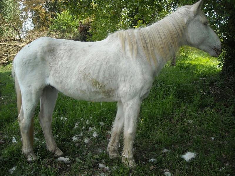IMPREVU - OI (poney D) né en 1996 - adopté en juillet 2016 par Patricia Dscn0918