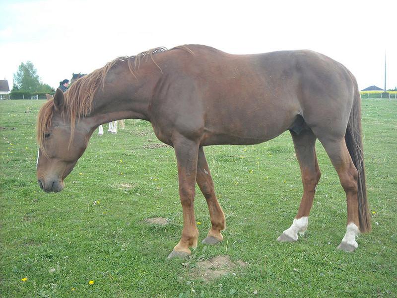 POCKET - TF né en 2003 - Adopté en septembre 2009 par katywilltrans Dscn0930