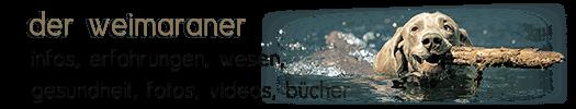 Der Weimaraner allgemein - Infos, Wesen, Gesundheit, Fotos