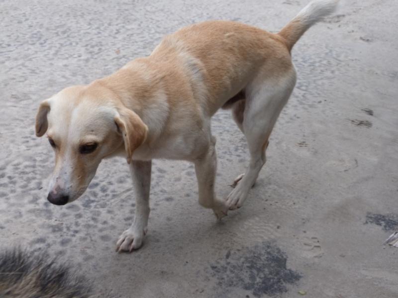 Mon reportage sur les chiens d'ailleurs P1010710