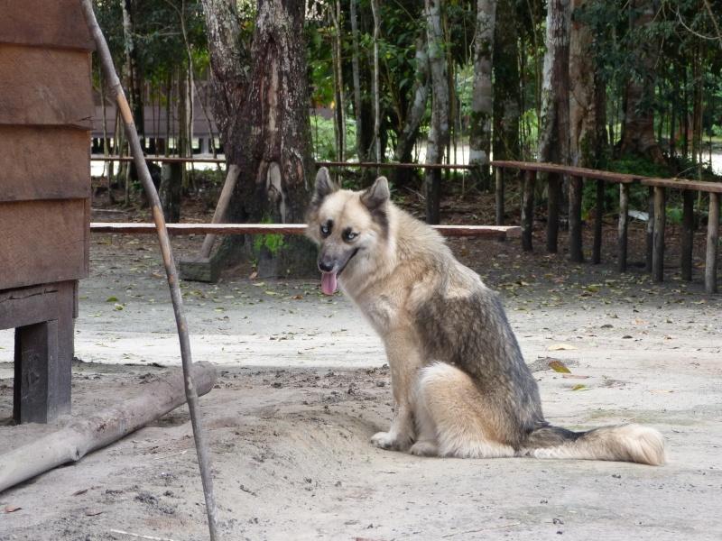 Mon reportage sur les chiens d'ailleurs P1010711