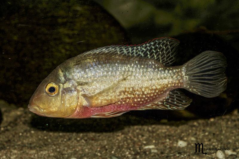 quelques fish de chez moi Dsc00810