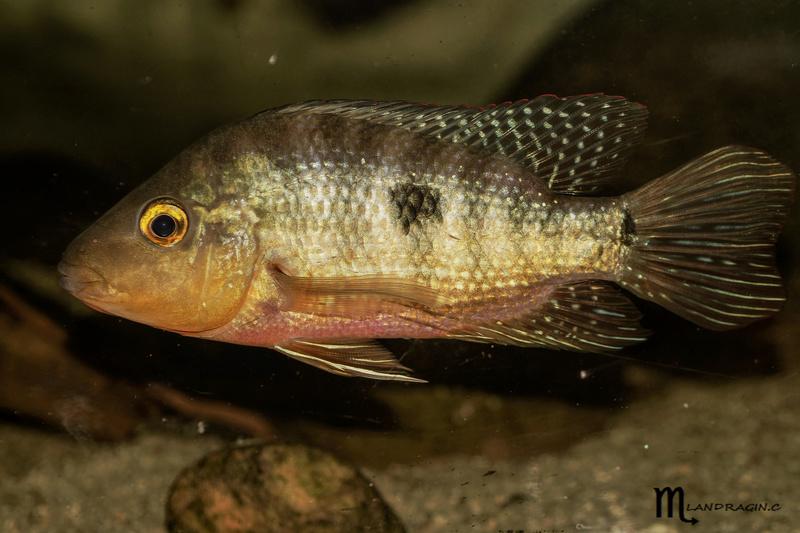 quelques fish de chez moi Dsc01310
