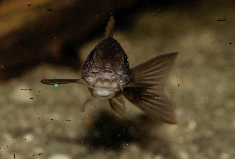 quelques fish de chez moi Dsc08910