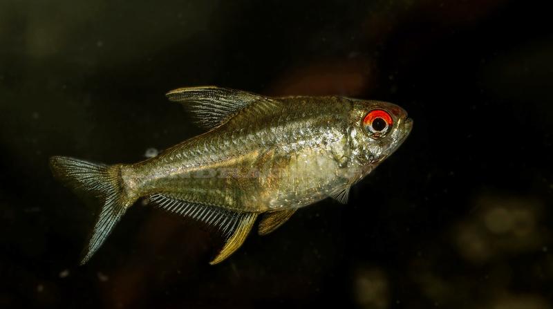 quelques fish de chez moi Dsc09510