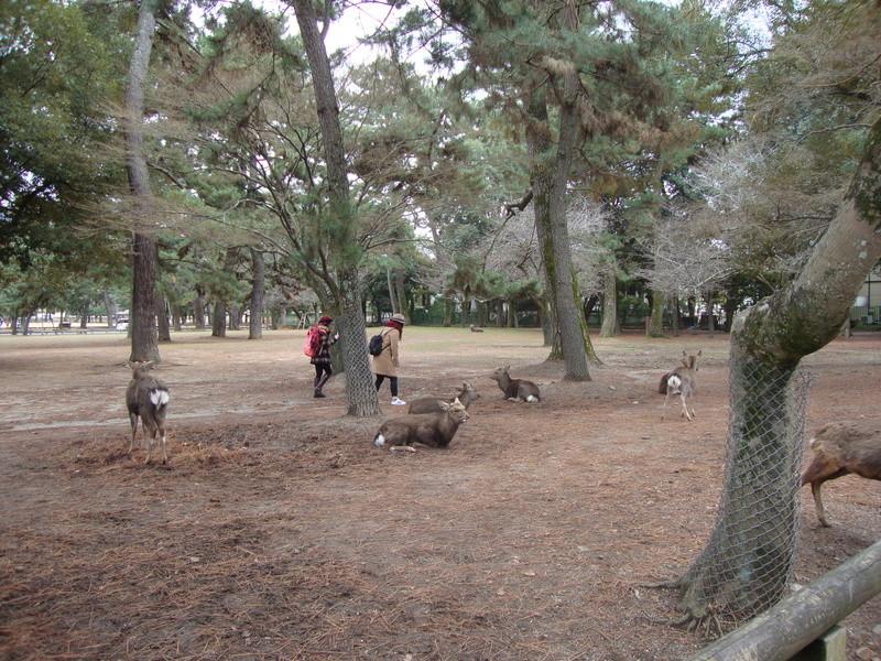 日本に行きましょう ! [Photos] Dsc08610