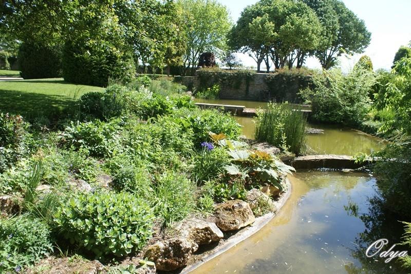 Parc Foulon  ( 49 )Doué la Fontaine Dsc04817