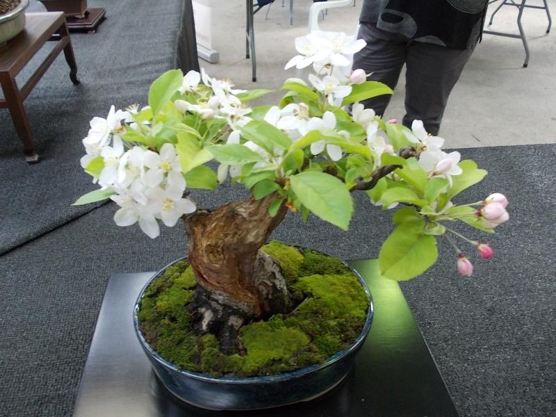 la passion du bonsai - Page 2 Dscn0213
