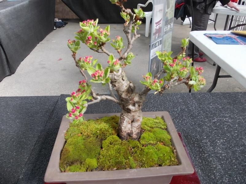 la passion du bonsai - Page 2 Dscn0215