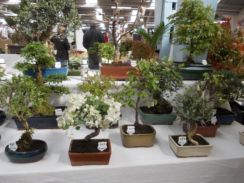 la passion du bonsai - Page 3 Dscn0216