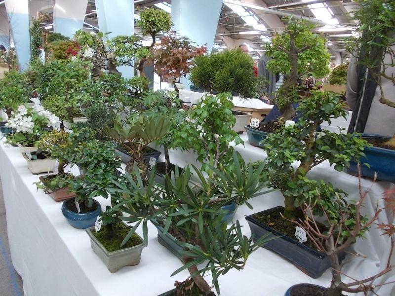la passion du bonsai - Page 3 Dscn0217