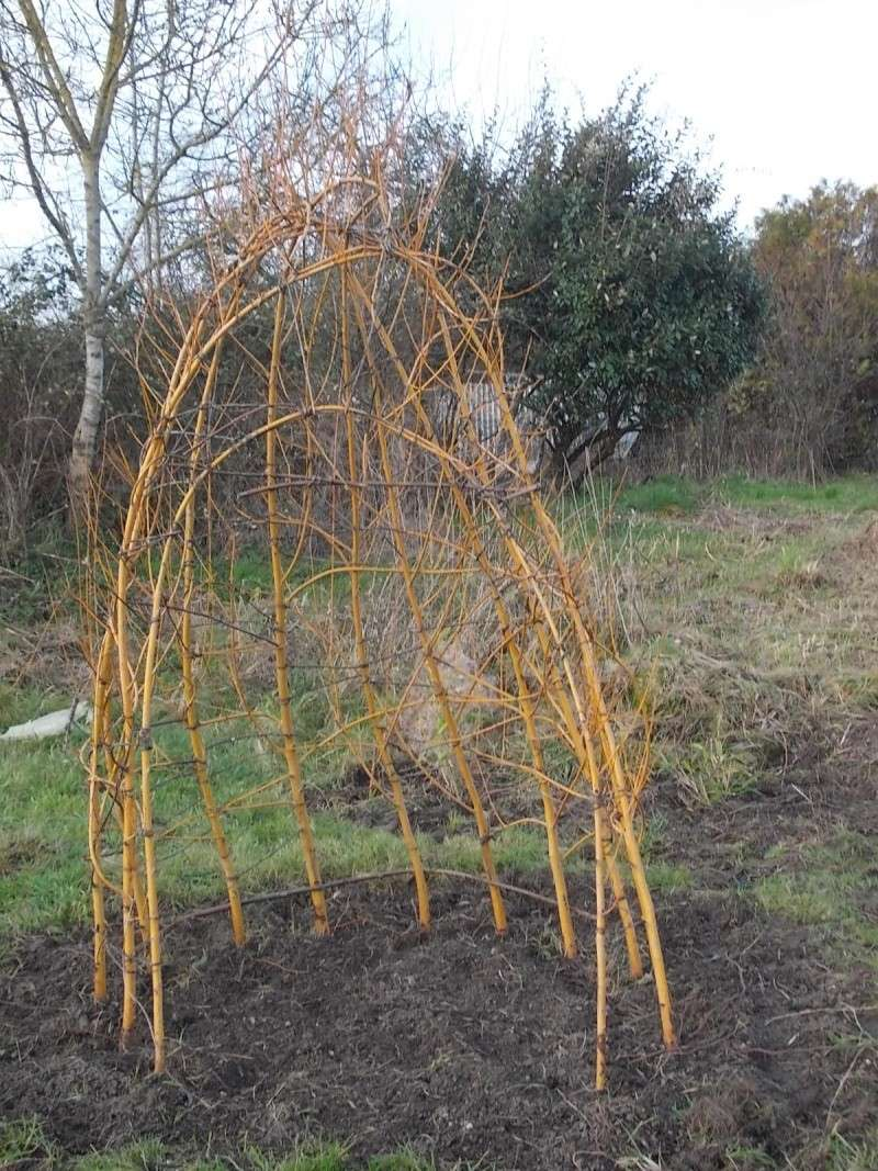 L'osier au jardin : plessis - haie végétale - cabane - tipi Dscn4422
