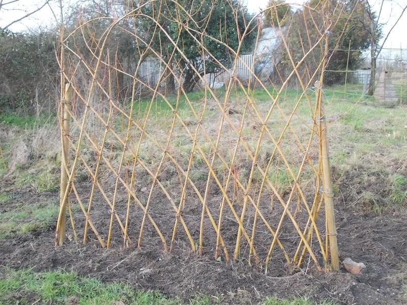 L'osier au jardin : plessis - haie végétale - cabane - tipi Dscn4423