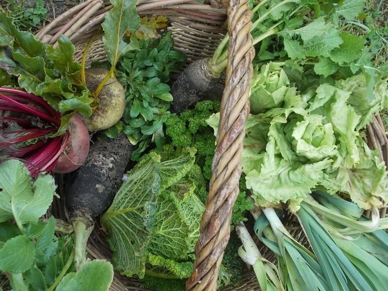 Les légumes d'hiver  Dscn4519