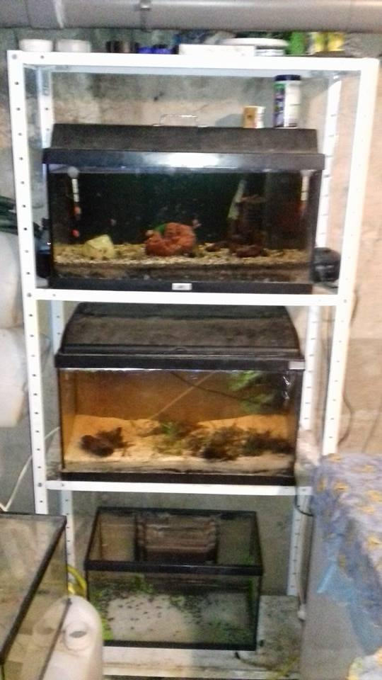 aquariums  16176211