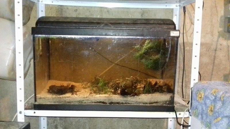 aquariums  16216310