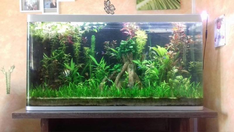 aquariums  18160010