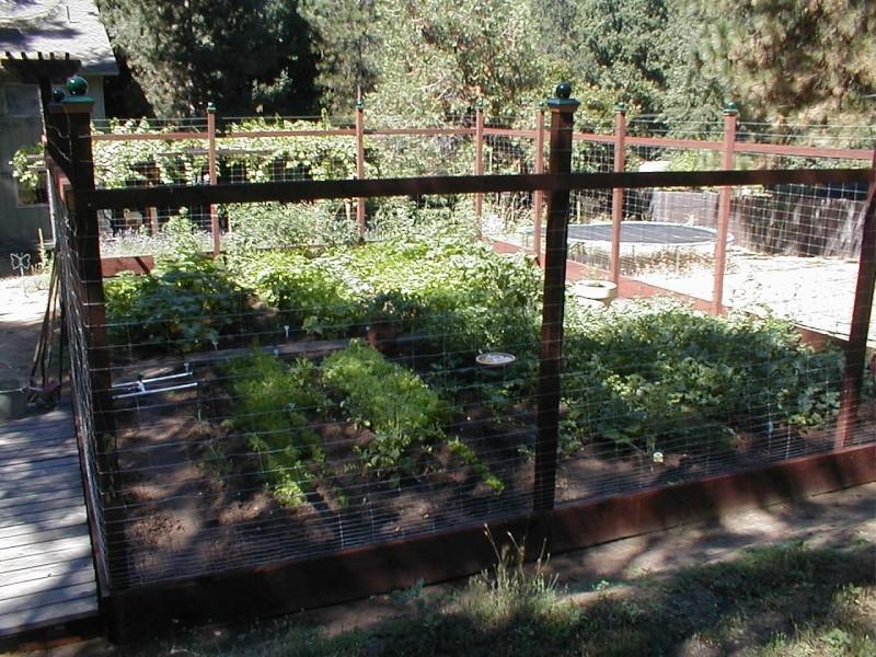 Garden, Getting Ready! New tool & Lehman's Free Shipping! P1010310