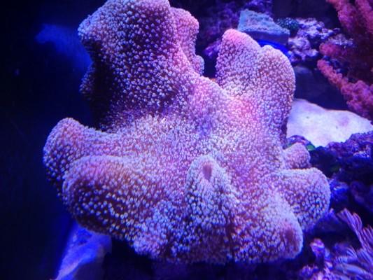 CONCOURS PHOTO ... coraux mou 110