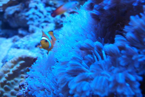 CONCOURS PHOTO ... coraux mou 510