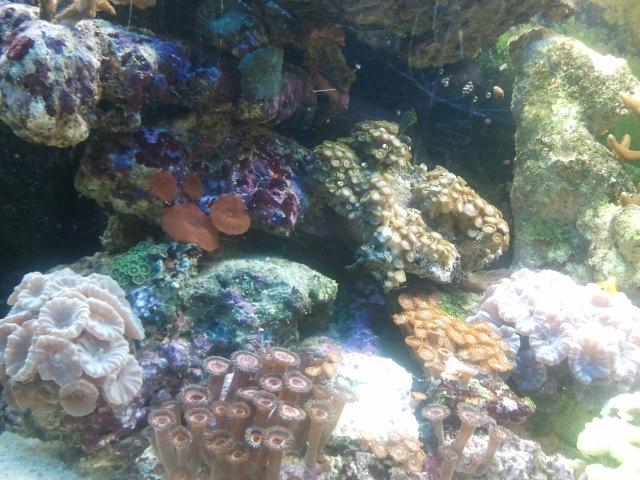CONCOURS PHOTO ... coraux mou 610