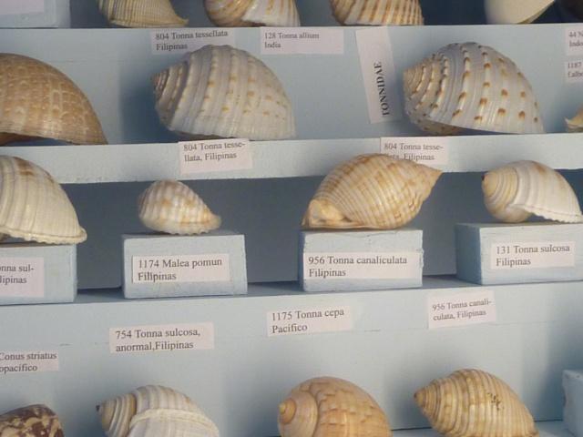 Musée océanographique de Monaco Ste_ba11