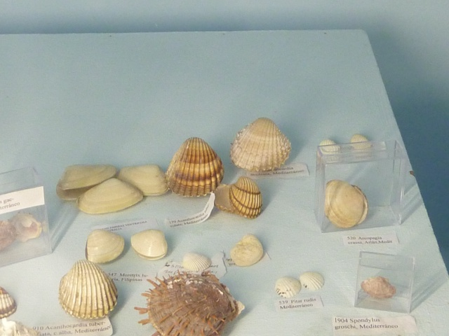 Musée océanographique de Monaco Ste_ba12