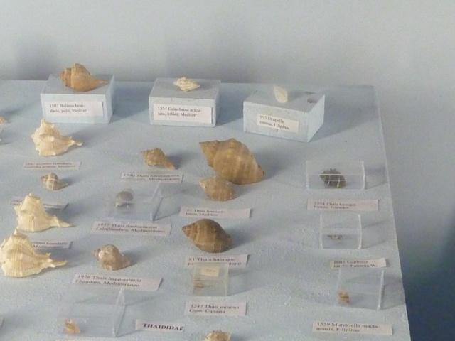 Musée océanographique de Monaco Ste_ba13
