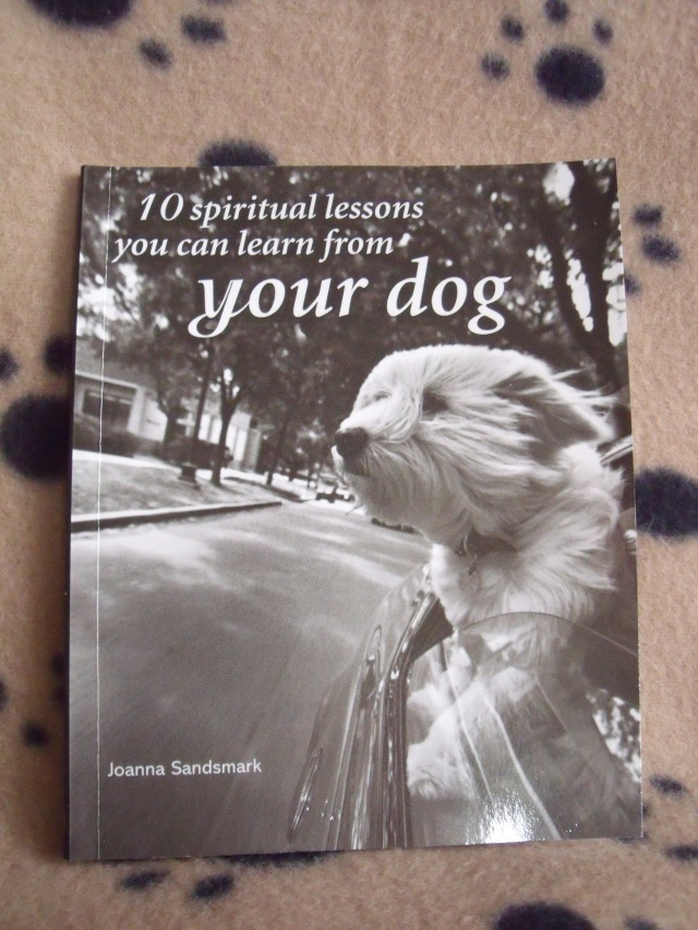 39.  Book '10 Spiritual Lessons You Can Learn From Your Dog'  Dog_bo10