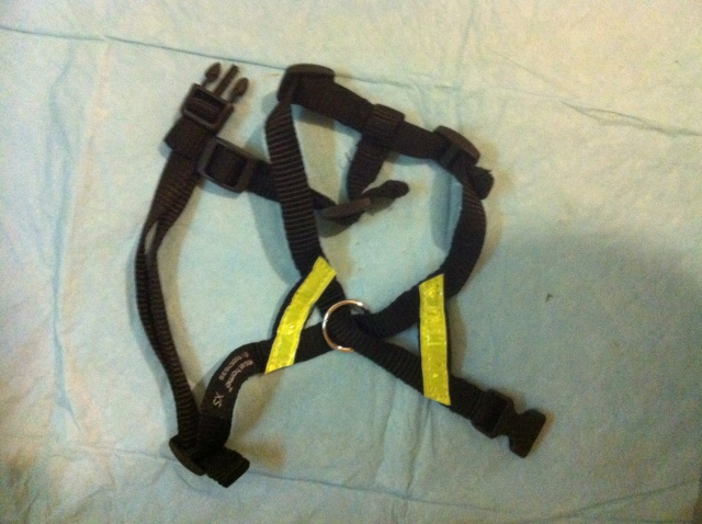 109.  Flourescent Dog Harness XS Img_2611