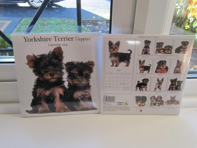 33. Yorkie Puppies Calendar - Number Two Zzzzzz12