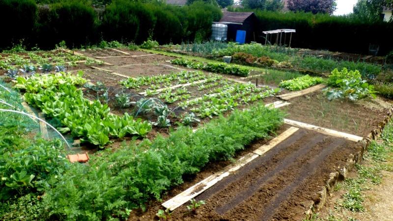 Que faire en Juin au jardin ? P1110510