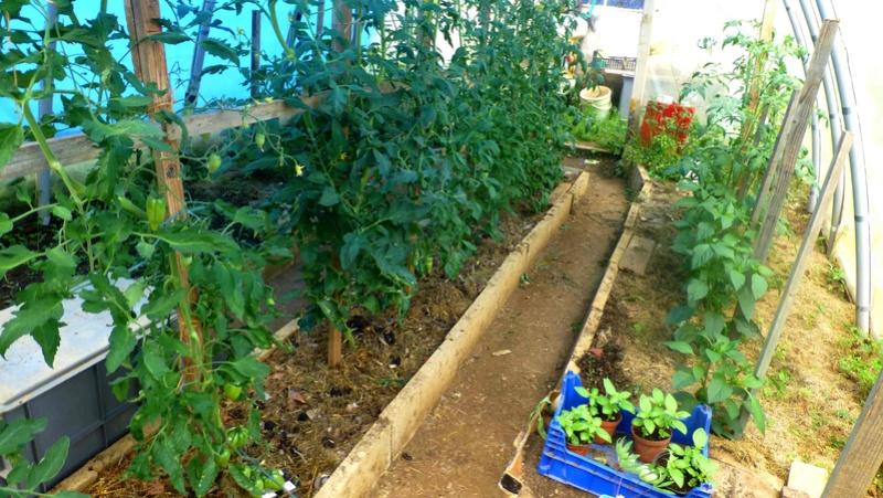 Que faire en Juin au jardin ? P1110512