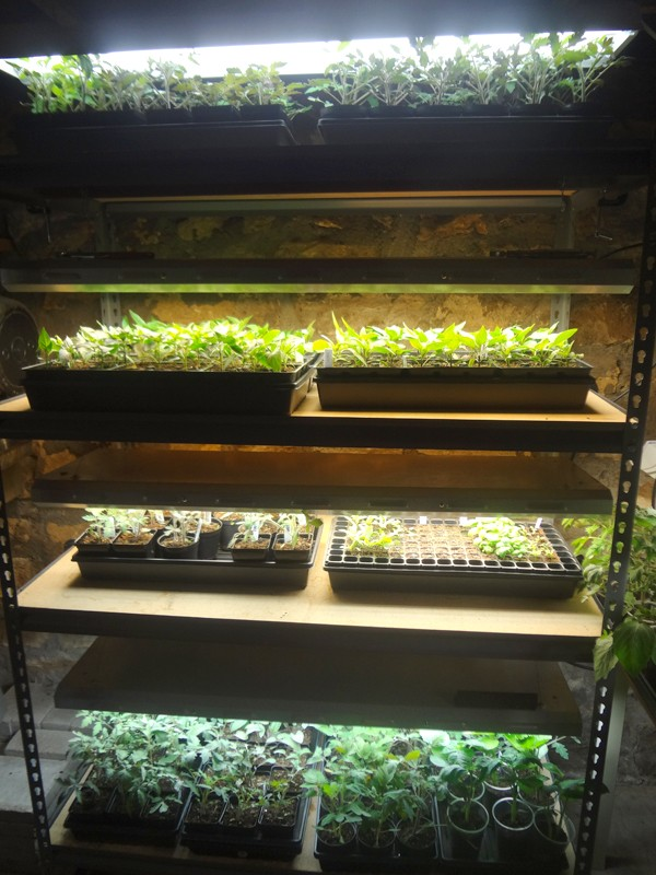 grow lights vs. natural sunlight Lights14