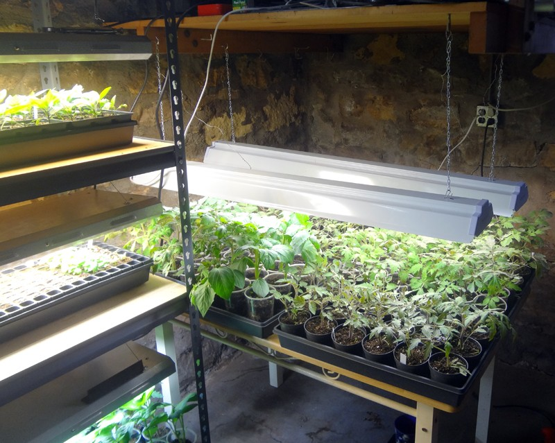 grow lights vs. natural sunlight Lights15