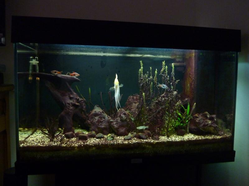 aqua 125L P1050813