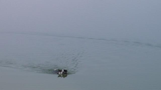 temps de nage d'un chien ? - Page 2 Sam_0010