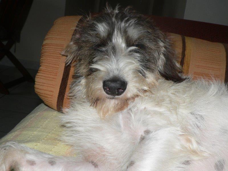 Dogsitting été 2014 à la Réunion P1060011