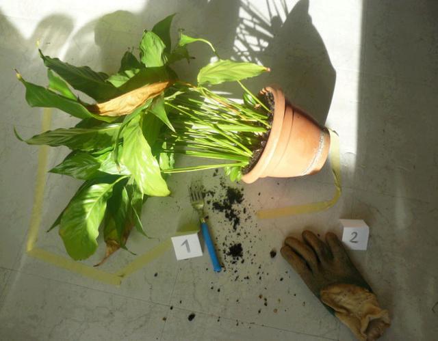 """Concours """"accessoires jardinistiques"""" - les votes Captur11"""