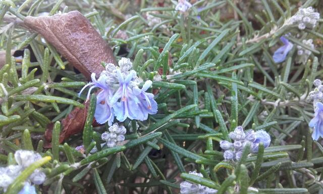 deux ou trois fleurs dans le vent - Page 3 Rps20110