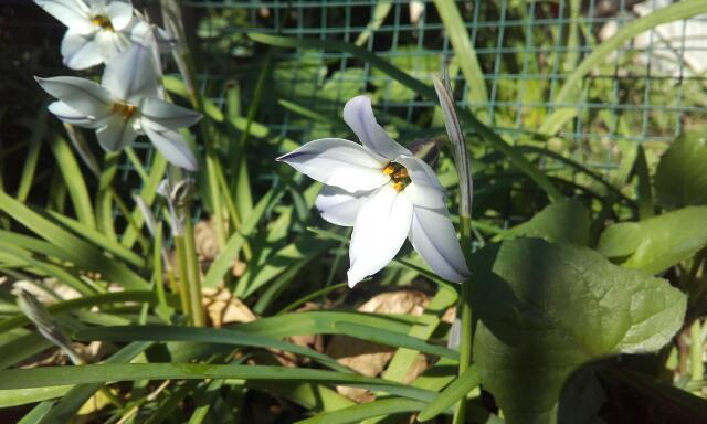 deux ou trois fleurs dans le vent - Page 3 Rps20111