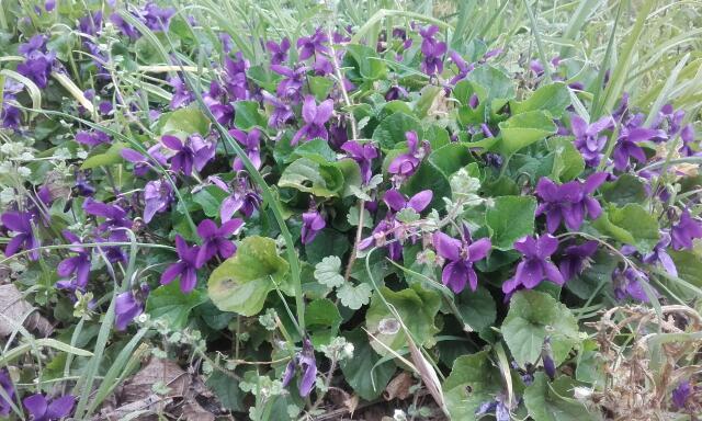 deux ou trois fleurs dans le vent - Page 4 Rps20146