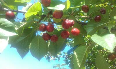 récoltes de saison Rps20353