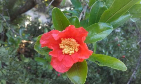 ces quelques fleurs de nos jardins Rps20372