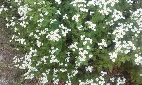 ces quelques fleurs de nos jardins Rps20373
