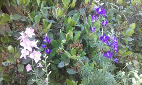 ces quelques fleurs de nos jardins Rps20374
