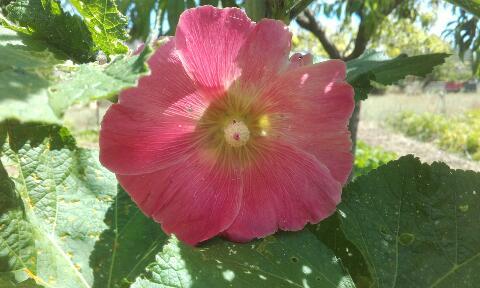 ces quelques fleurs de nos jardins Rps20375